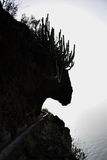 动物形状岩石 免版税库存图片