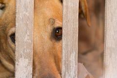 动物恶习和虐待的狗受害者 免版税库存图片