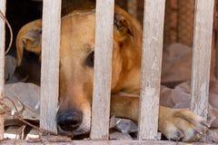 动物恶习和虐待的狗受害者 库存图片