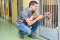 动物护工和狗 免版税库存图片