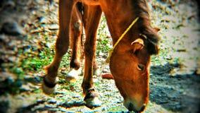 动物摄影 免版税库存照片