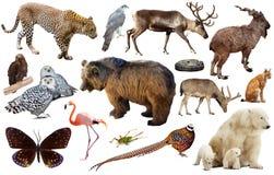 动物收藏亚洲 免版税库存照片