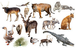 动物收藏亚洲 库存照片
