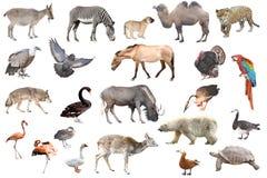 动物收藏查出的白色 库存图片