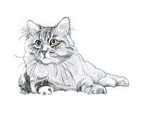 动物收藏:猫 免版税库存图片