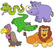 动物收集逗人喜爱的野生生物 免版税库存照片