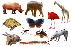 动物收集 免版税图库摄影