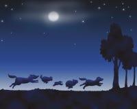 动物晚上 皇族释放例证