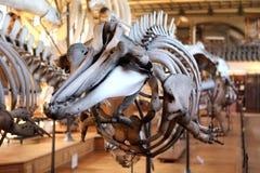 动物最基本的自然历史博物馆巴黎 免版税库存图片
