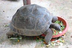 动物有甲壳 免版税库存图片