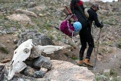 动物有背包的走在足迹的头骨和远足者在背景 库存图片