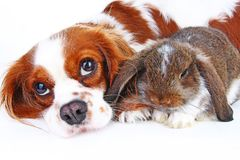 动物朋友 真实的宠物朋友 狗兔子兔宝宝在被隔绝的白色演播室背景一起砍动物 宠物爱 库存照片