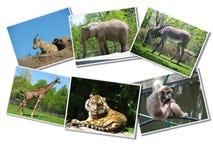 动物束照片 库存照片