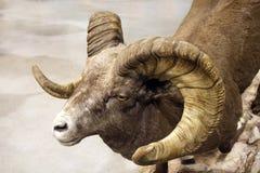 动物标本剥制术 库存照片