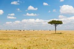 动物树和牧群在大草原的在非洲 免版税库存图片