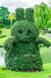 动物树在Suanluang RAMA 9公园 图库摄影