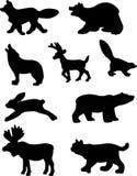 动物森林 免版税图库摄影