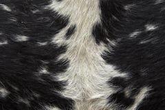 动物模式 免版税库存照片