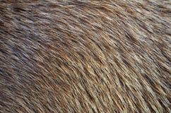 动物毛皮背景 免版税库存图片