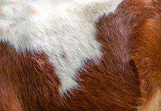 动物毛皮,小马 免版税图库摄影