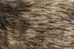 动物毛皮 图库摄影
