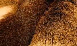动物毛皮iv 库存图片