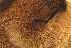 动物毛皮v 库存照片