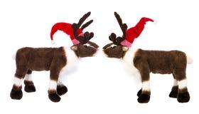 动物爱:两驯鹿或麋与圣诞节的de圣诞老人帽子 免版税库存照片