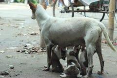 动物爱 免版税库存照片