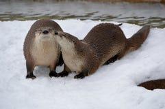 动物爱 库存图片