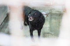 动物狗风雨棚 免版税图库摄影