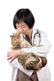 动物猫医生亲吻 免版税库存照片