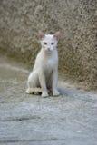 动物猫年轻人 图库摄影