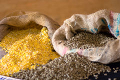 动物玉米食物 免版税库存图片