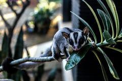 动物生命 免版税库存图片
