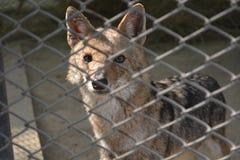 动物生活在篱芭后的 免版税库存照片