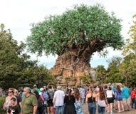 动物界公园,华特・迪士尼世界,奥兰多,佛罗里达 免版税图库摄影