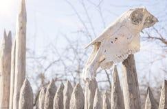 动物的两块头骨在大农场篱芭的 免版税图库摄影