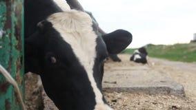 动物的保护免受谋杀 股票视频