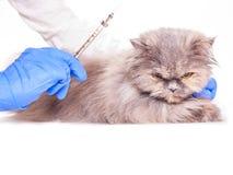 动物的接种在一个兽医诊所 免版税库存照片