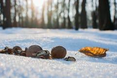 动物的核桃在公园在冬天 免版税库存图片