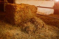 动物的米秸杆 图库摄影