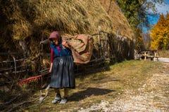 动物的老妇人运载的干草 免版税库存图片