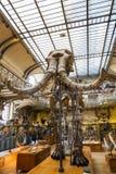 动物的骨骼在古生物学和比较解剖学画廊的在巴黎 图库摄影
