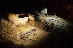 动物的骨骼在洞Emine Bair Khosar的 克里米亚 免版税库存图片