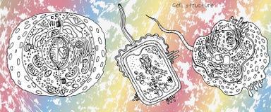 动物细胞、细菌细胞和植物胞状结构,在明亮的梯度的短剖面详细的五颜六色的解剖学 库存图片