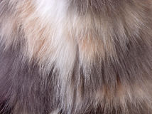 动物羊毛特写镜头的图象 库存图片