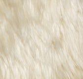 动物羊毛 免版税库存图片