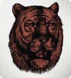 动物老虎,手图画 也corel凹道例证向量 免版税图库摄影