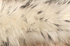 动物背景毛皮纹理 免版税库存照片